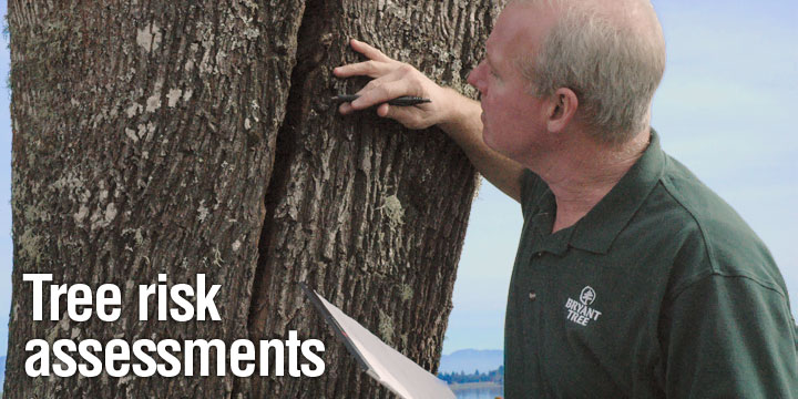 Corrective pruning