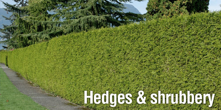 Hedges and shrubbery